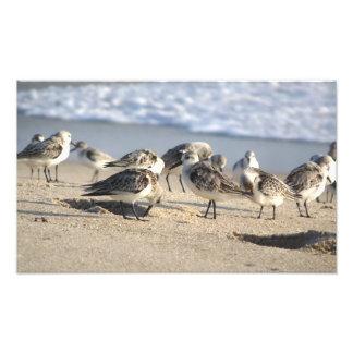 Beach Party. Sebastian Inlet. Photo Print