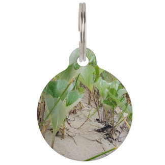 Beach plants summer pet ID tag