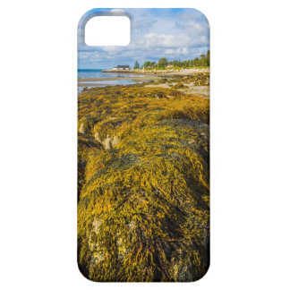 Beach Seaweed Case For The iPhone 5