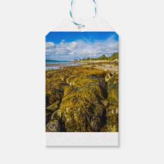 Beach Seaweed Gift Tags