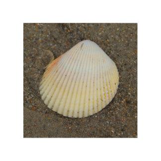 Beach Shell Wood Prints