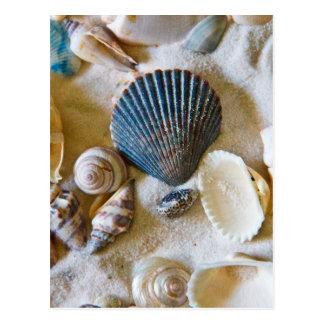 Beach Shells Theme #1 Postcard