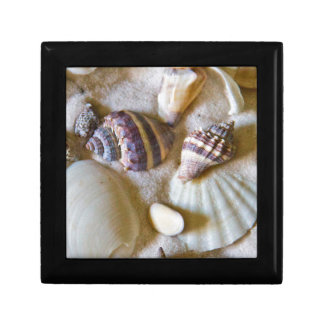 Beach Shells Theme #2 Gift Box