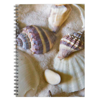 Beach Shells Theme #2 Note Books