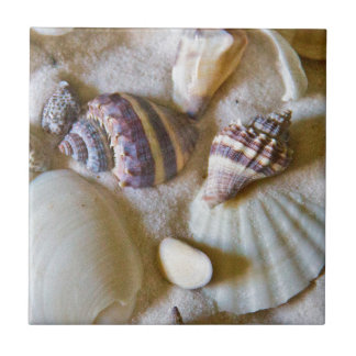 Beach Shells Theme #2 Tile