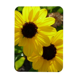 Beach Sunflowers Magnet
