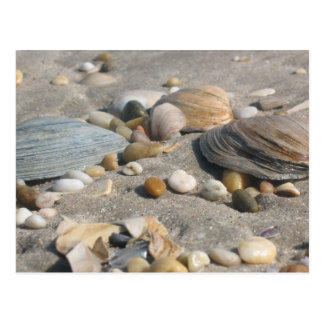 Beach Treasures Postcard