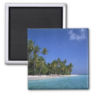 Beach with palm trees, Maldives Square Magnet