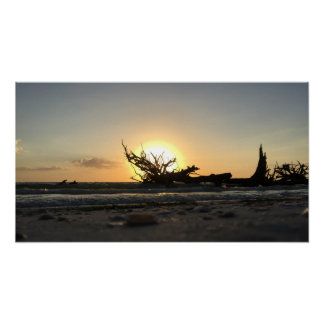 Beached Driftwood at Sunset Poster