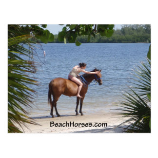BeachHorses.com Postcard