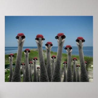 Beachy Cranes Poster
