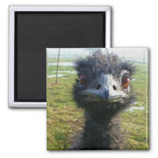 Beady Eyes EMU Square Magnet