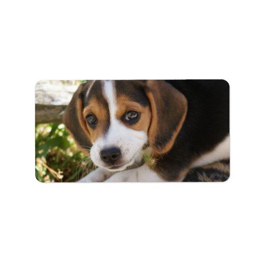 Beagle Baby Dog