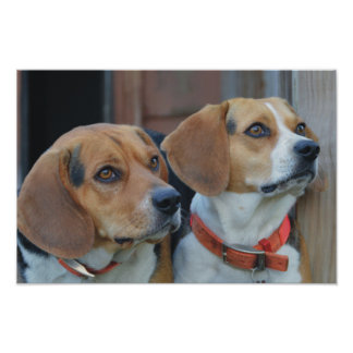 Beagle Best Friends Poster