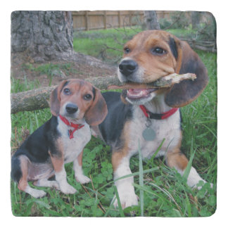 Beagle Buddies Chew Time Trivet