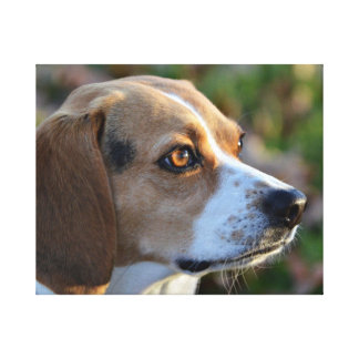 Beagle Determination Canvas Print