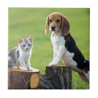 Beagle Dog And Grey Tabby Kitten Tile