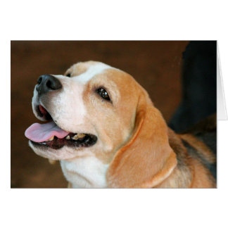 Beagle Dog Card