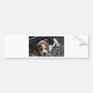 Beagle Dog Close Up Bumper Sticker