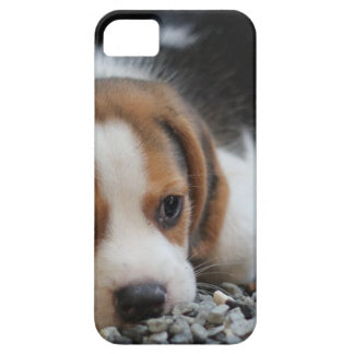 Beagle Dog Close Up Case For The iPhone 5