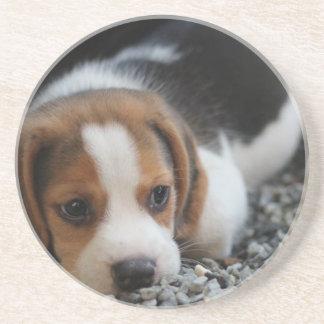 Beagle Dog Close Up Coaster
