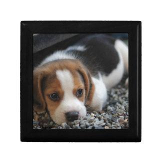 Beagle Dog Close Up Gift Box