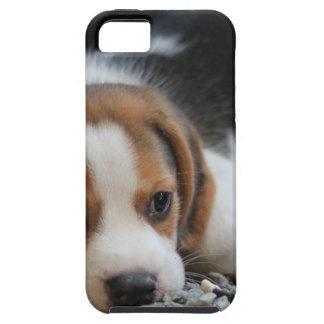 Beagle Dog Close Up iPhone 5 Case