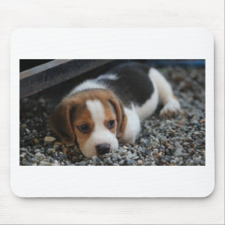 Beagle Dog Close Up Mouse Pad