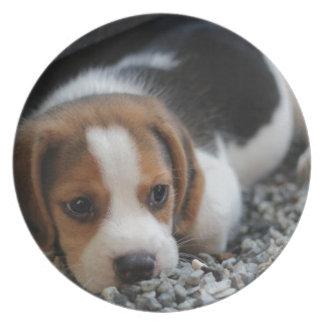 Beagle Dog Close Up Plate