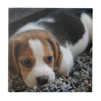 Beagle Dog Close Up Tile