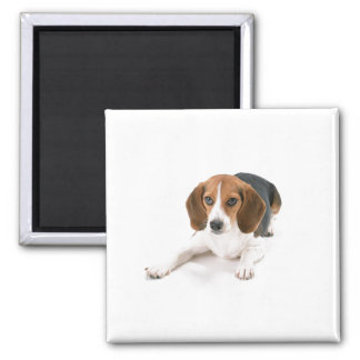 Beagle Dog Magnet