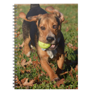 Beagle Flying Ears Houndie Face & Tennis Ball Notebook