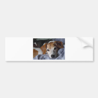 Beagle-Harrier Dog Bumper Sticker