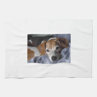 Beagle-Harrier Dog Kitchen Towel