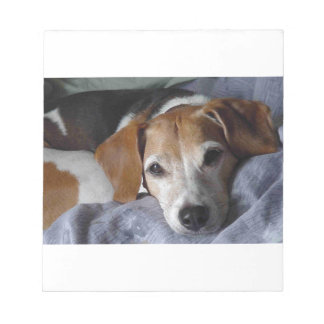 Beagle-Harrier Dog Notepad