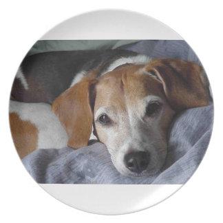 Beagle-Harrier Dog Plate
