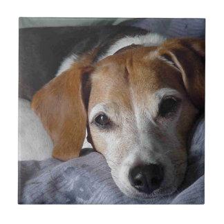 Beagle-Harrier Dog Tile