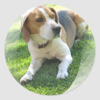 Beagle Hound Dog Sticker