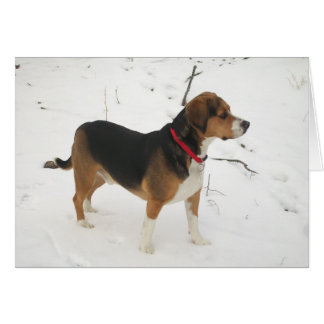 Beagle Hound Hunting In Snow Greeting Card Cooper