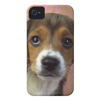 Beagle I-phone 4 Case-Mate iPhone 4 Cases