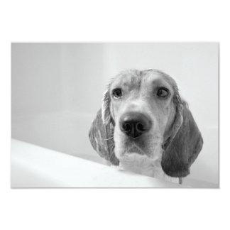 "Beagle in the Bathtub 3.5"" X 5"" Invitation Card"