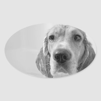 Beagle in the Bathtub Oval Sticker