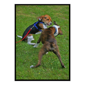 Beagle Knocks Out Competition Poster