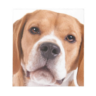 Beagle Notepad