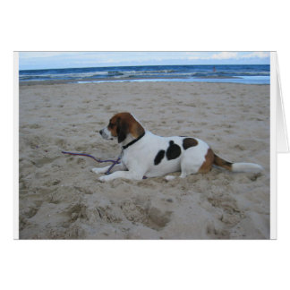 Beagle on beach.png card