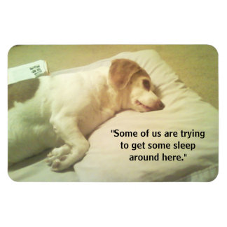 """Beagle Photo """"Trying to Get Some Sleep"""" 4x6 Magnet"""