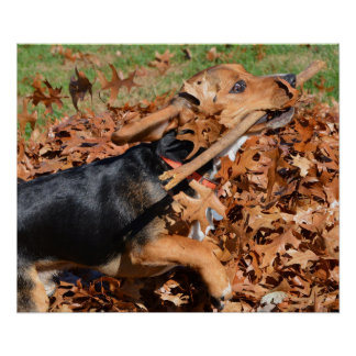 Beagle Playing With Stick In The Leaves Poster