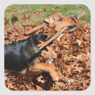 Beagle Playing With Stick In The Leaves Square Sticker