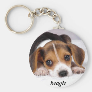 beagle-puppies-wallpaper-11.jpg, beagle keychain