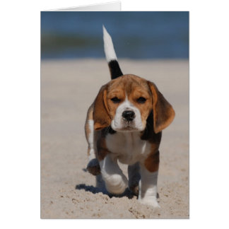 Beagle puppy card